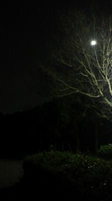 blue moon2.jpg